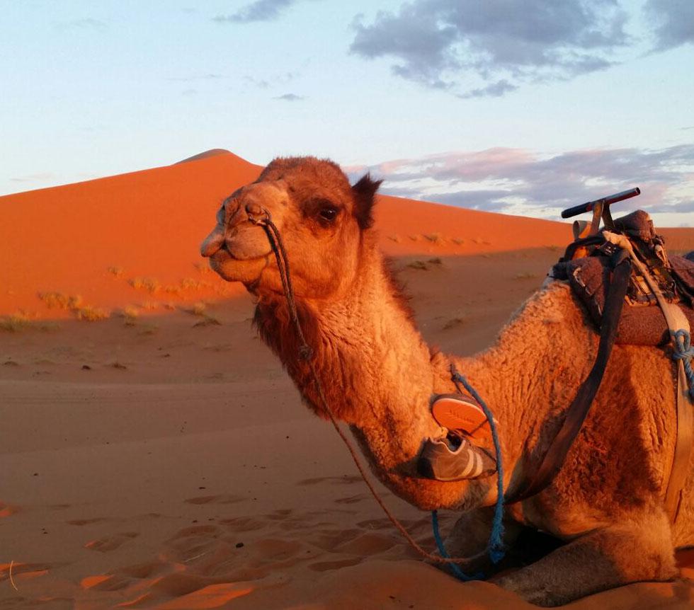 Atardecer en las dunas de Merzouga (Marruecos)