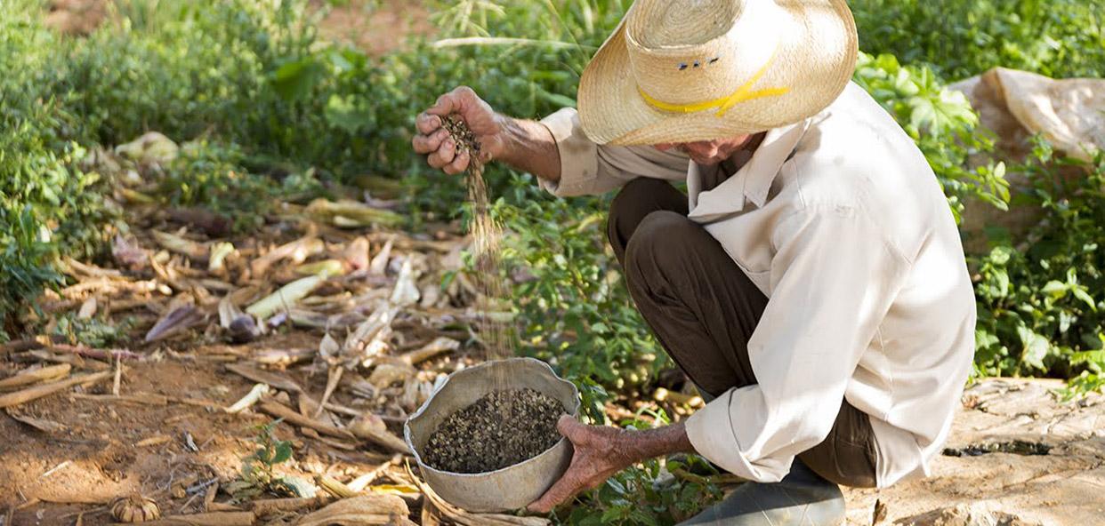 A-punto-de-preparar-un-rico-cafe-cubano
