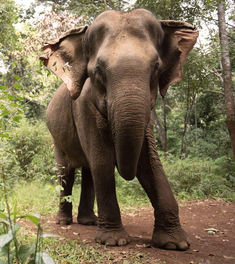 Centro-conservacion-fauna-Mondulkiri-Camboya