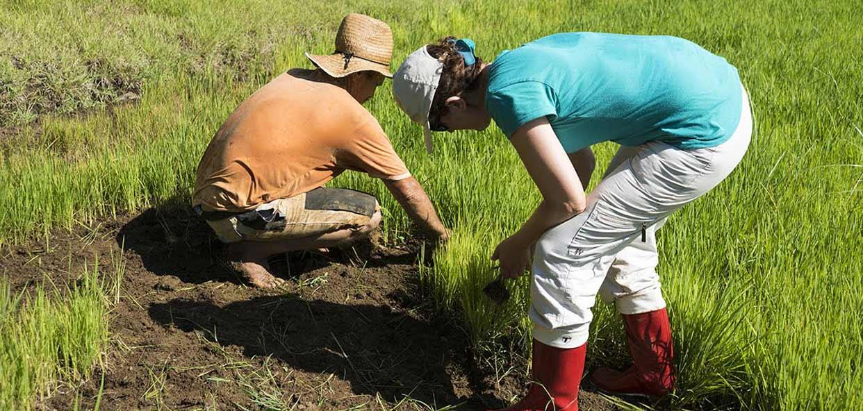 Colabora-y-aprende-en-el-huerto-ecologico.-Turismo-responsalbe-y-sostenible