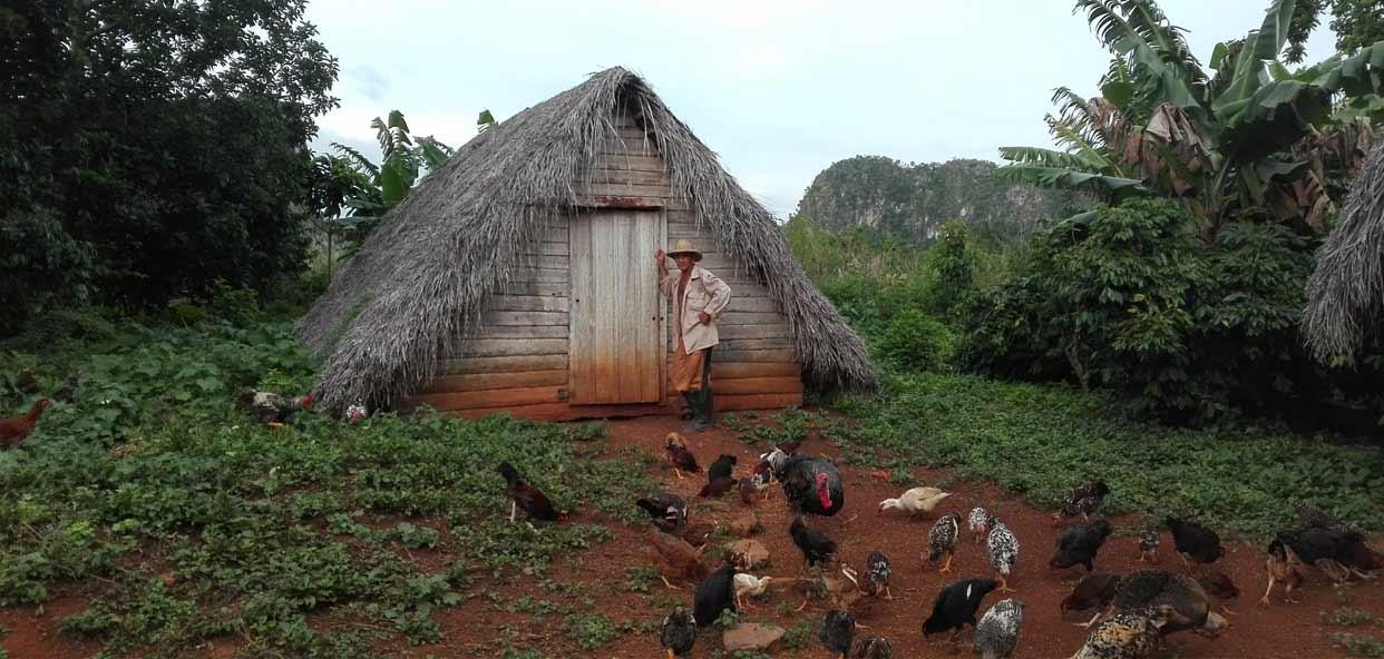 Secadero-tabaco-cubano-turismo-responsable-y-sostenible