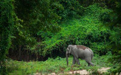 Umphang, paraiso elefantes Tailandia