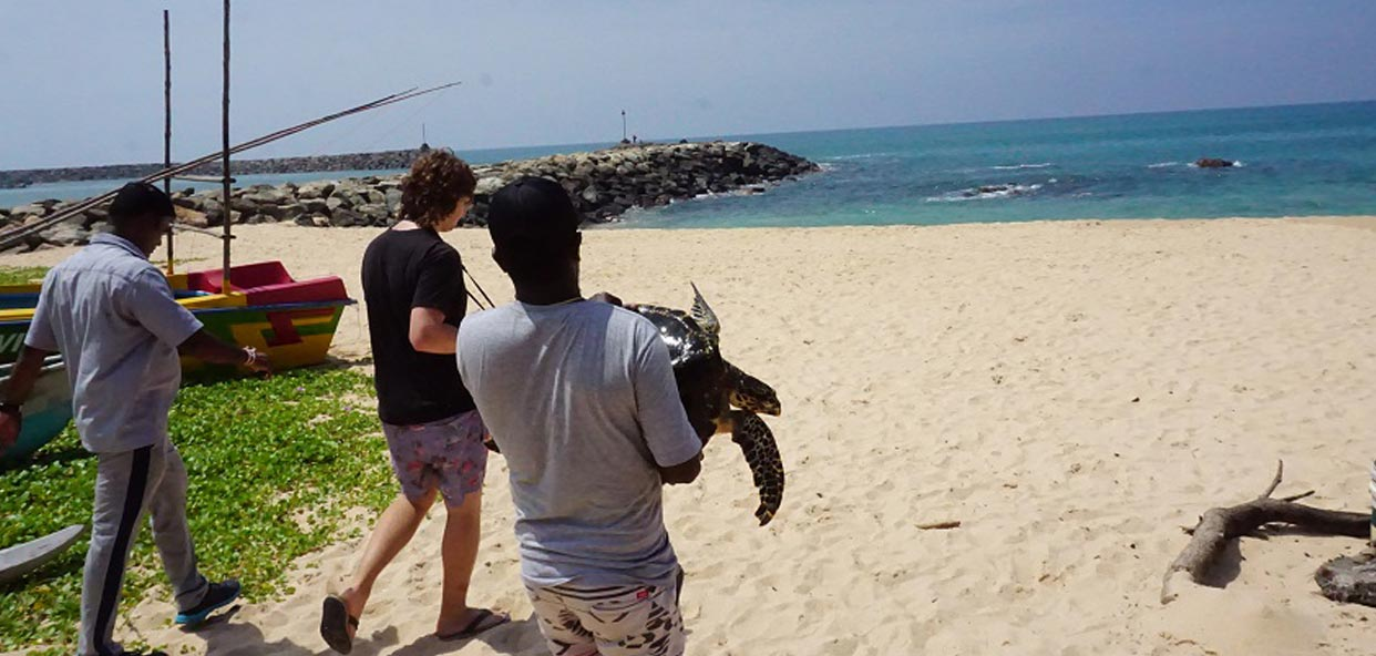 tortugas-sri-lanka-oceano-soltar